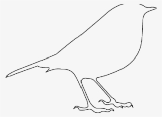 Bird PNG, Transparent Bird PNG Image Free Download - PNGkey