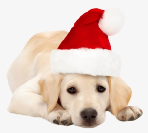 da44fa3390ddd Dog With Santa Hat Png Clipart - Golden Retriever Red Bow  112890