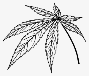 Cannabis Leaf Png Transparent Cannabis Leaf Png Image