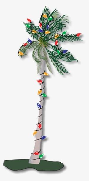 Clip Free Download Palms Vector Palmyra Tree - Palm Tree ...