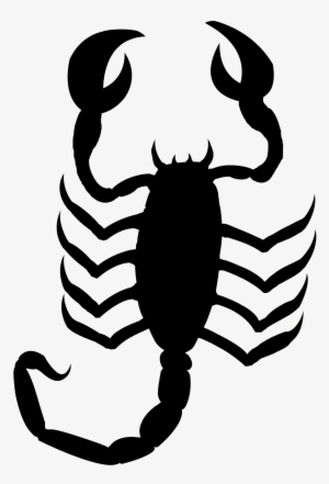 66b30c6da Jpg Black And White Library Bugs Drawing Scorpion - Scorpion Outline Png   158759