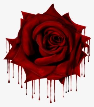 Rose Png Transparent Rose Png Image Free Download Pngkey