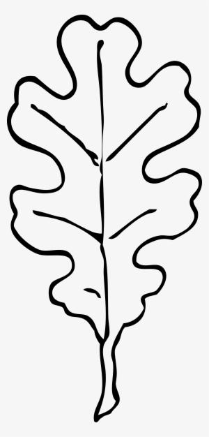 Oak Leaf Transparent Oak Leaf Image Free Download