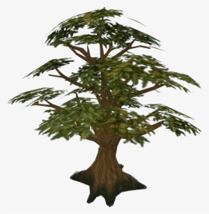 Tree Png Transparent Tree Png Image Free Download Pngkey