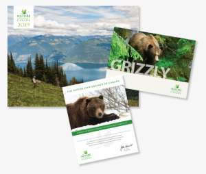 86492e3991f Grizzly Bear  4357186