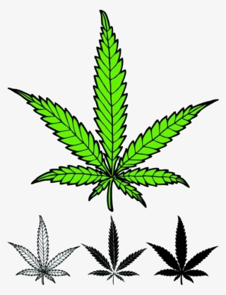 weed leaf png transparent weed leaf png image free download pngkey weed leaf png transparent weed leaf