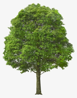 Tree Bush PNG, Transparent Tree Bush PNG Image Free Download - PNGkey