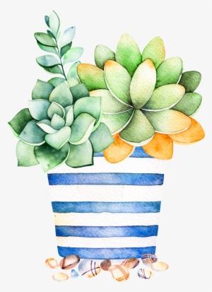 Succulent PNG, Transparent Succulent PNG Image Free Download - PNGkey