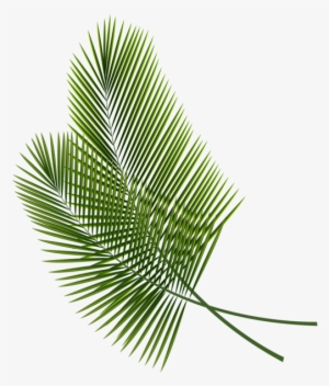 Tropical Leaves Png Transparent Tropical Leaves Png Image Free Download Pngkey Lovepik provides 170000+ vector leaves photos in hd resolution that updates everyday, you can free download for both personal and commerical use. tropical leaves png transparent