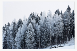 Snow Tree PNG, Transparent Snow Tree PNG Image Free Download