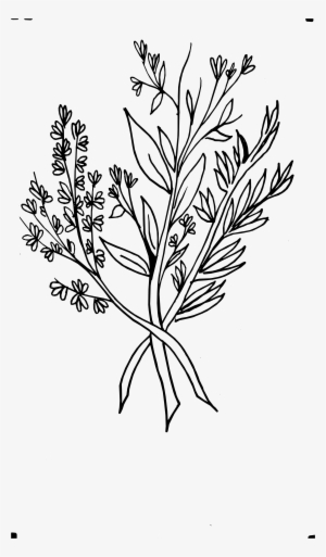 Flower Outline Drawing Black White Flowers Free Dinosaur Lily Flower Clipart Black And White