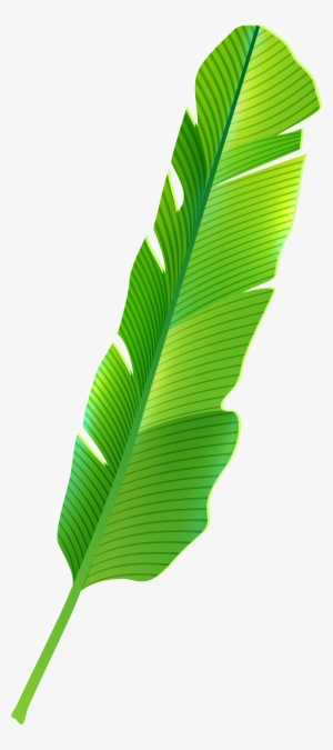 Tropical Leaf Png Transparent Tropical Leaf Png Image Free Download Pngkey Lowest price with subscription plan. tropical leaf png transparent tropical