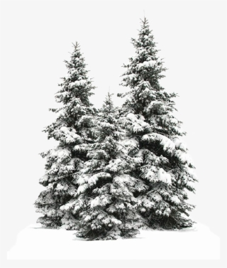 Snow Tree Clip art - Snowy Tree Transparent PNG Image png download -  6885*8000 - Free Transparent Tree png Download. - Clip Art Library
