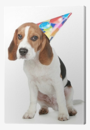 Beagle Puppy With Birthday Party Hat Canvas Print O