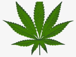 Weed Leaf Png Transparent Weed Leaf Png Image Free Download Pngkey
