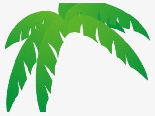 Palm Leaf PNG, Transparent Palm Leaf PNG Image Free Download