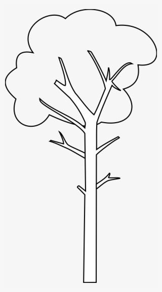 Tall Tree Png Transparent Tall Tree Png Image Free Download Pngkey