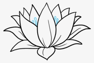 Lotus Flower Png Transparent Lotus Flower Png Image Free Download