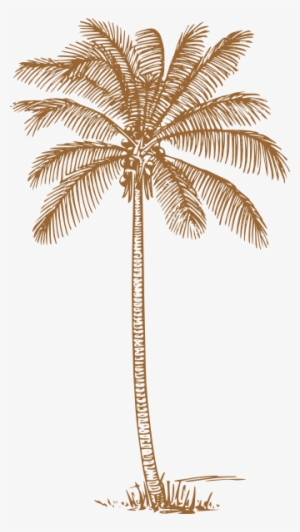 Palm Tree Png Transparent Palm Tree Png Image Free Download Page