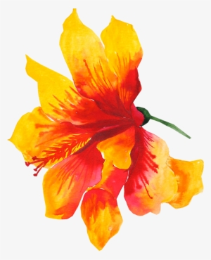 Hibiscus Flower Png Transparent Hibiscus Flower Png Image Free