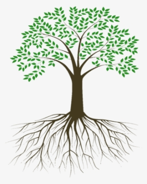 Roots PNG, Transparent Roots PNG Image Free Download , Page