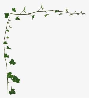 Ivy Border Png Transparent Ivy Border Png Image Free Download Pngkey
